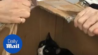 Eleven young cats are freed after being locked inside cardboard boxes