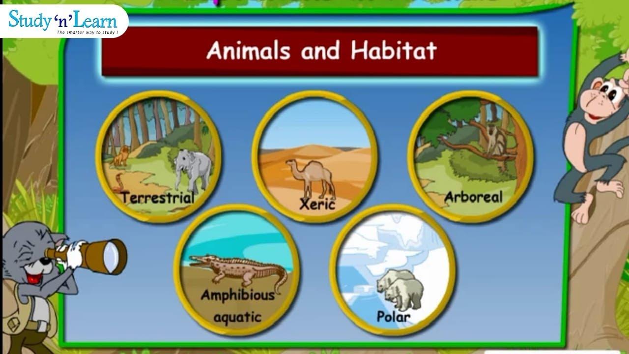 hight resolution of Adaptations in Animals   Habitats   Terrestrial Aquatic   Class 4 - YouTube