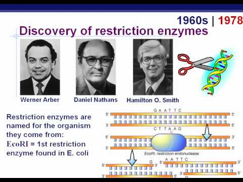 Ch. 20 - Biotechnology 1.wmv