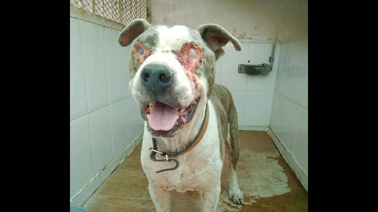 urgent-blind-in-the-pound-waiting-to-be-euthanised