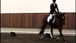 FOR SALE:  1999 Hanoverian Broodmare - Marlowe at Region 6 Championships