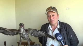 Anadolu Ajansı - Yaban hayvanlarını makete dönüştürüyor