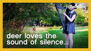 Girl Attracts Deer While Playing Harp in the Woods