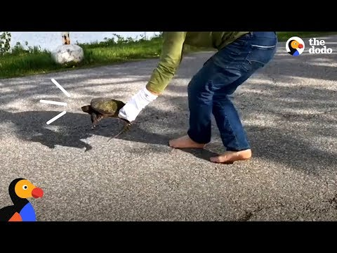 Family Finds A Stranded Snapping Turtle | The Dodo