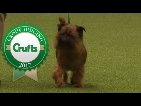 Toy Group Judging and Presentation | Crufts 2017