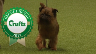Toy Group Judging and Presentation   Crufts 2017