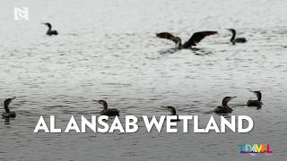 Travel Oman: Al Ansab Wetland