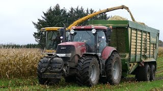 New Holland FR9060 Working Hard in The Field During Maize Season | Häckseln | Puma 230 | DK Agri