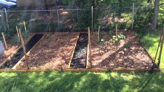 Back To Eden Wood Chip Vegetable Garden, Update.