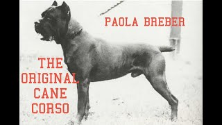 PAOLO BREBER: CANE CORSO SCHOLAR