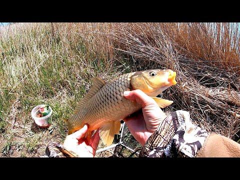 В очередной раз изолировалась на рыбалке.