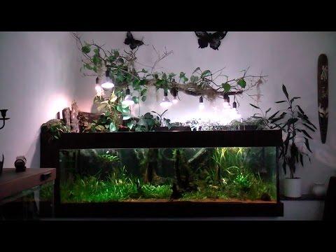 1200l Aquarium, Südamerika Becken mit LED-Beleuchtung. Mit Peru Altum, Sammler und L-Welsen
