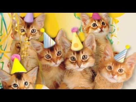 Cute Cats Sing Happy Birthday Youtube