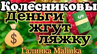 Колесниковы /Обзор новых Влогов /Деньги жгут Ляжку//