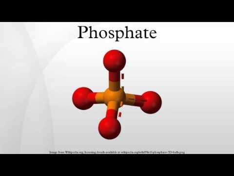 Inorganic Phosphate Phosphate - You...