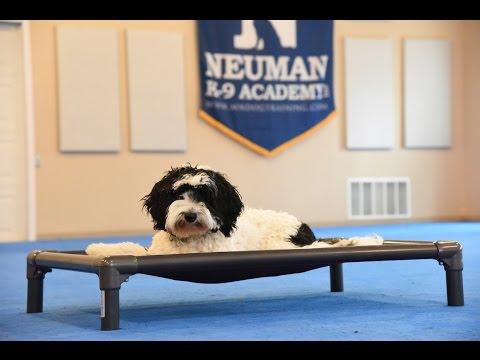 PJ (Goldendoodle) Puppy Camp Dog Training Demonstration