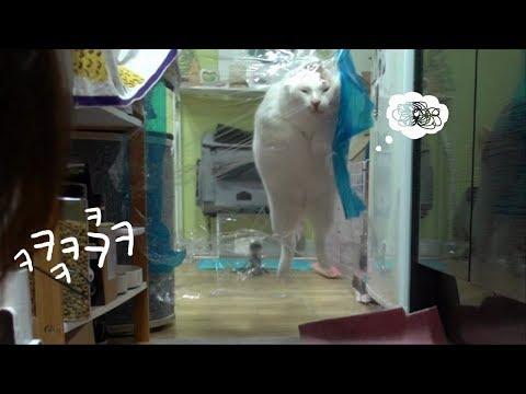 투명벽에 도전하는 고양이