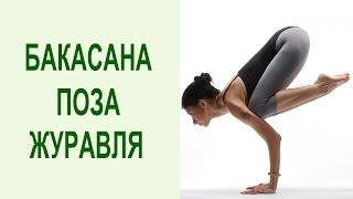 Как выполнять бакасану? Бакасана (поза журавля) для начинающих: позы йоги на руках. Yogalife