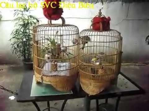 Chim Khanh + Trung Asean