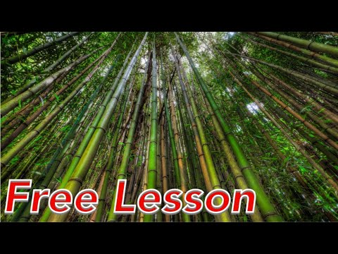 FREE LESSON | Landscape Photography Post Processing & HDR Course | Bamboo Forest