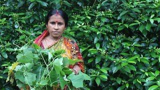 Village Food | Cooking Simple Tela Kachu Shak Kacha Lanka Diye Bengali Food Recipe by my Mother