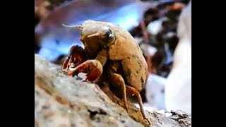 仰向けになって起き上がれなくなっていた幼虫を見つけたので いろいろサ...