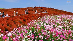Colorful Flower Field - The Most Beautiful Flower Fields in the World