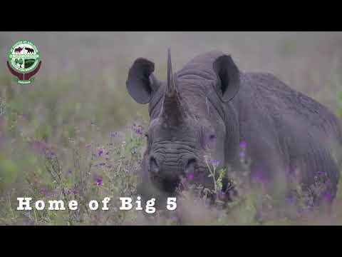 Ngorongoro Live Get Connected