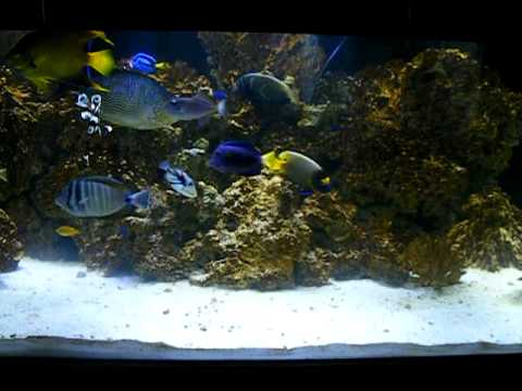 300 gallon marineland deep dimension reef ready with reef leds youtube