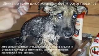 Приют встречает спасенного щенка Амира Помогите найти дом собаке Новосибирск