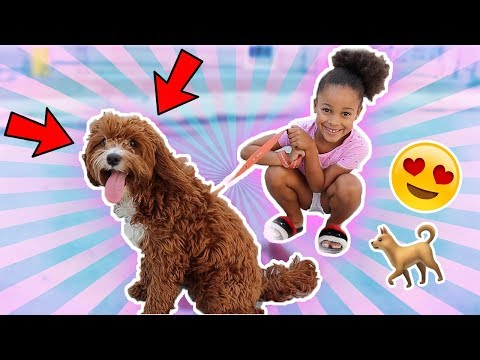 Cali Gets A Dog For A Day | Cali's Playhouse