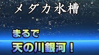 楊貴妃メダカ稚魚水槽立ち上げ【メダカ水槽#11】