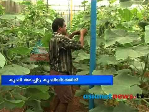 Alappuzha news polyhouse farming chuttuvattom29 april for Terrace krishi