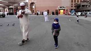 Ngasih Makan Burung Dara Di Masjid Nabawi Smotret Video Onlajn