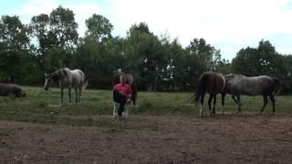 "Zasto konji  ""vuku""  na jahanju"