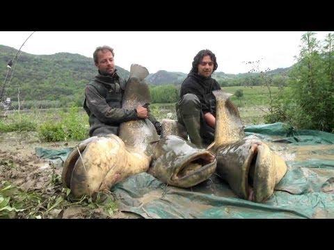 K-Karp Web TV - Tecniche di pesca - Siluri nel Tevere