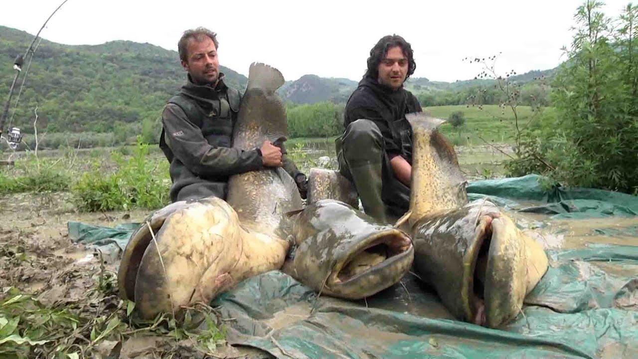 1.6 Pesca russa
