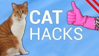 Cat & Kittens: Life Hacks, Tips, Tricks & DIY Toys!!