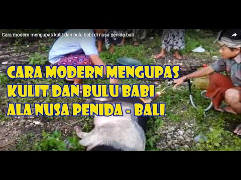 Cara modern mengupas kulit dan bulu babi di nusa penida bali