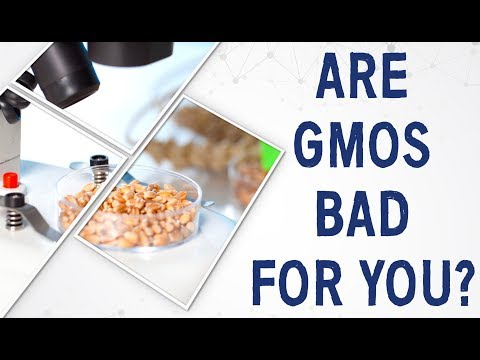 Ask Dr. Gundry: Are GMOs bad for you?