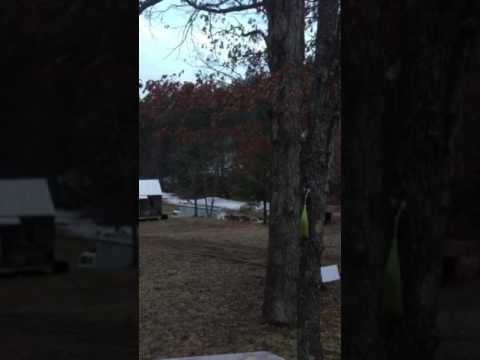 Turkeys and Deer feeding at the Cabin 3/2017