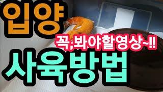 국민파충류~레오파드게코입양~~ 요건 꼭 보셔요~~^^