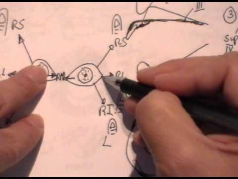 ANATOMÍA 2.0: PARPADOS Y MÚSCULOS EXTRAOCULARES 2/2 - YouTube