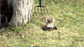 Squirrel Feeder.mpg