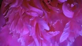 03 41 Rilke: Mein Leben ist wie leise See - Musik von Siegfried Zabransky