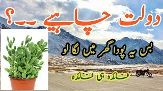 Money Tree || Money Plant Story In Urdu / Hindi || I