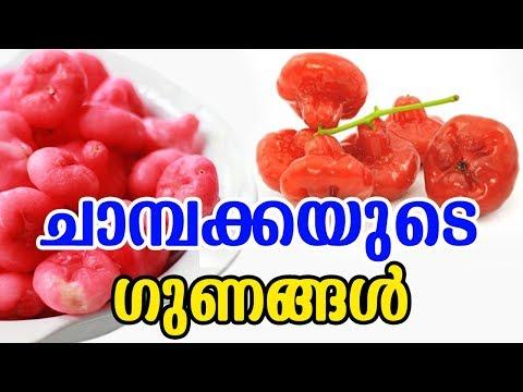 ചാമ്പക്കയുടെ ഗുണങ്ങൾ | Benefits Of Chambaka (Rose Apples) | MALAYALAMTASTY WORLD