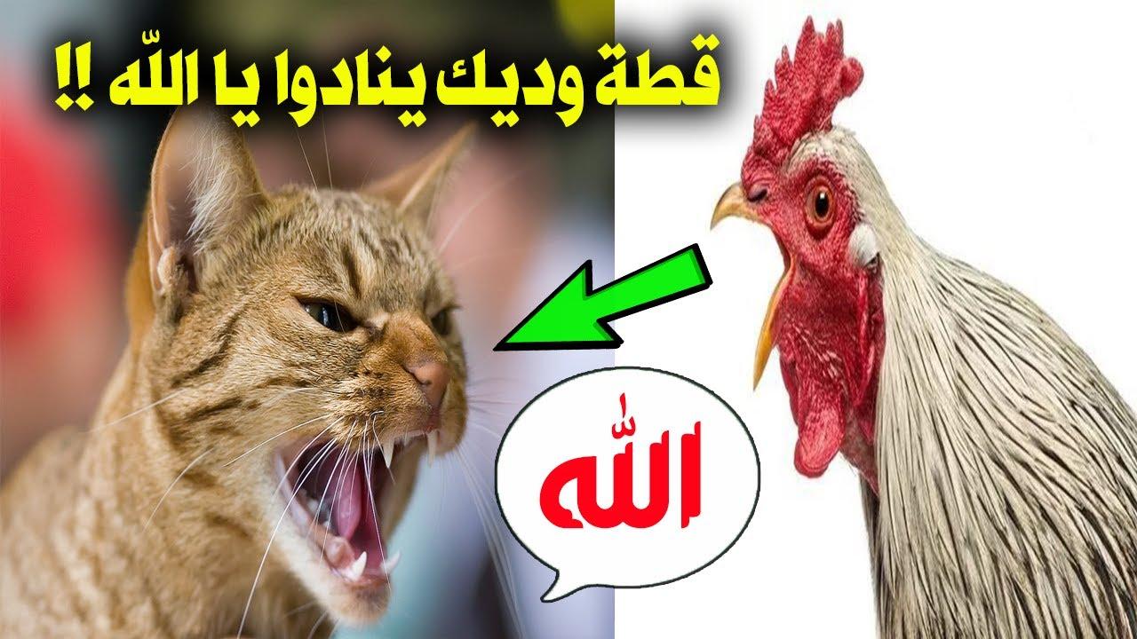 لن تصدق 7 حيوانات تتكلم مثل البشر تماماً وتذكر اسم الله امام آلاف المسلمين !! سبحان الله