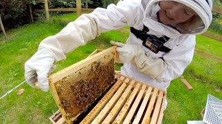 GoPro: Beekeeping with Maddie and Mum