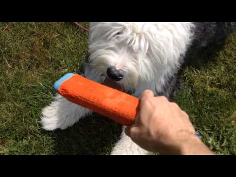 Dog Training Tips: Games with Your Dog